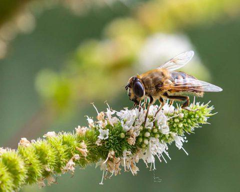biodiversity-net-gain